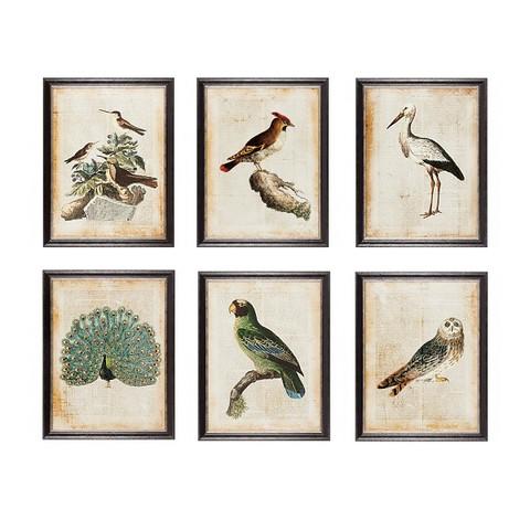 Постер Птицы экзотические